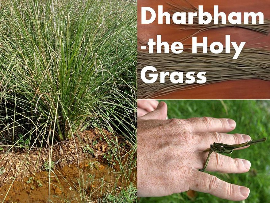Significance of Dharba Grass in Puja