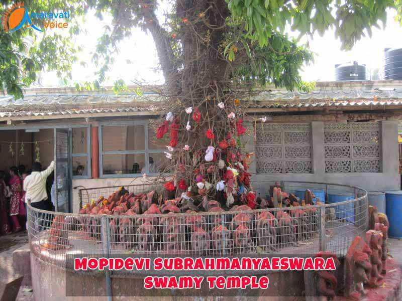 subrahmanyeswar-temple-mopidevi-tree